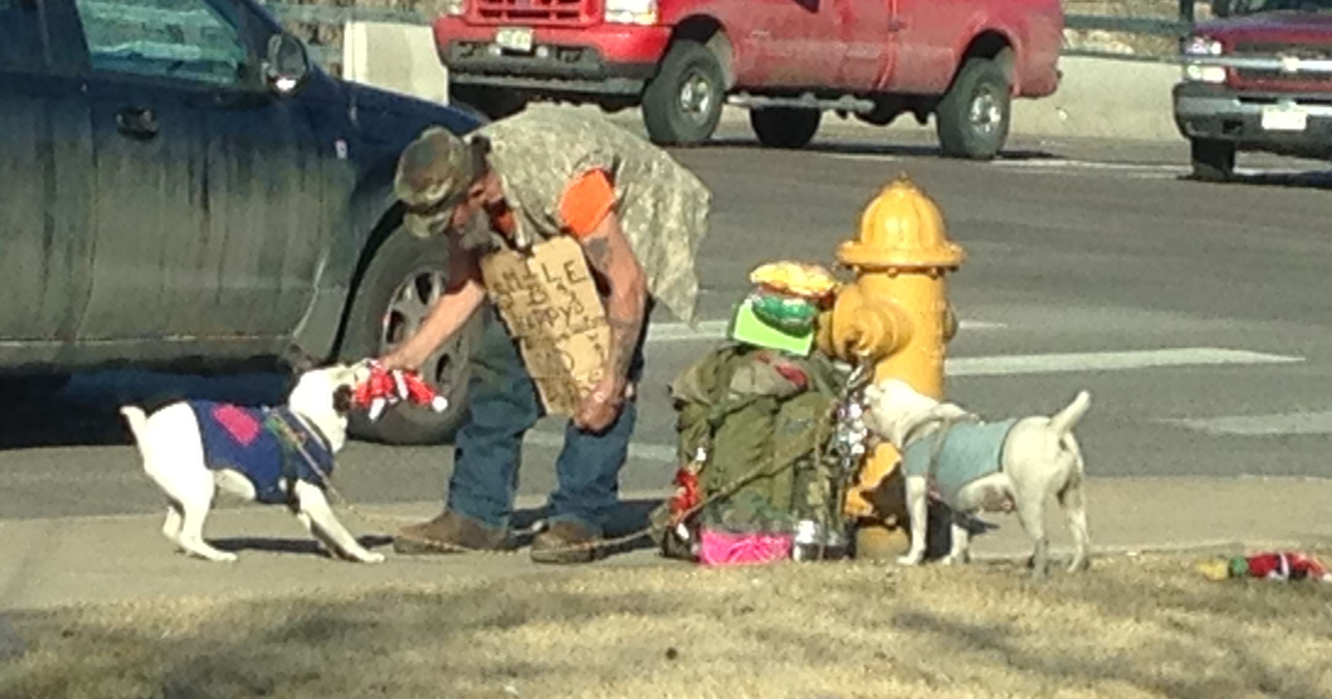 Homeless man and dogs