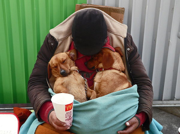 Homeless man and 2 dogs
