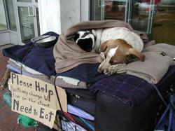 Homeless Dog on Street