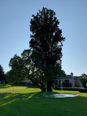Lilienberg Park 2
