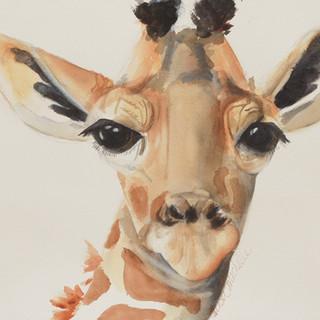 """Lucy the Giraffe"""
