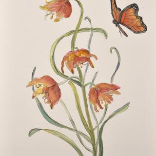 """""""Flutter By, Butterfly"""""""