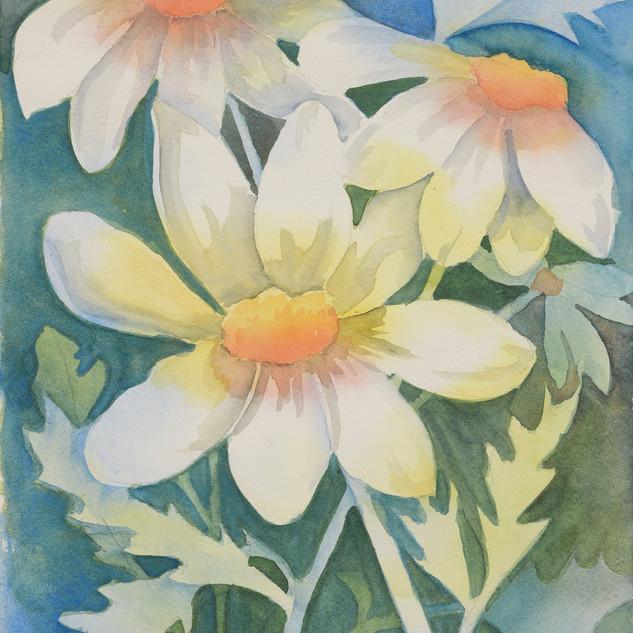 """""""Daisy Field"""""""