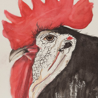 """""""White-Faced Rooster"""""""