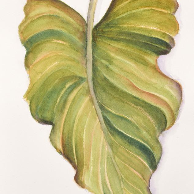 """Leaf Study"""