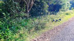 St Lucia Lodge - safari trours