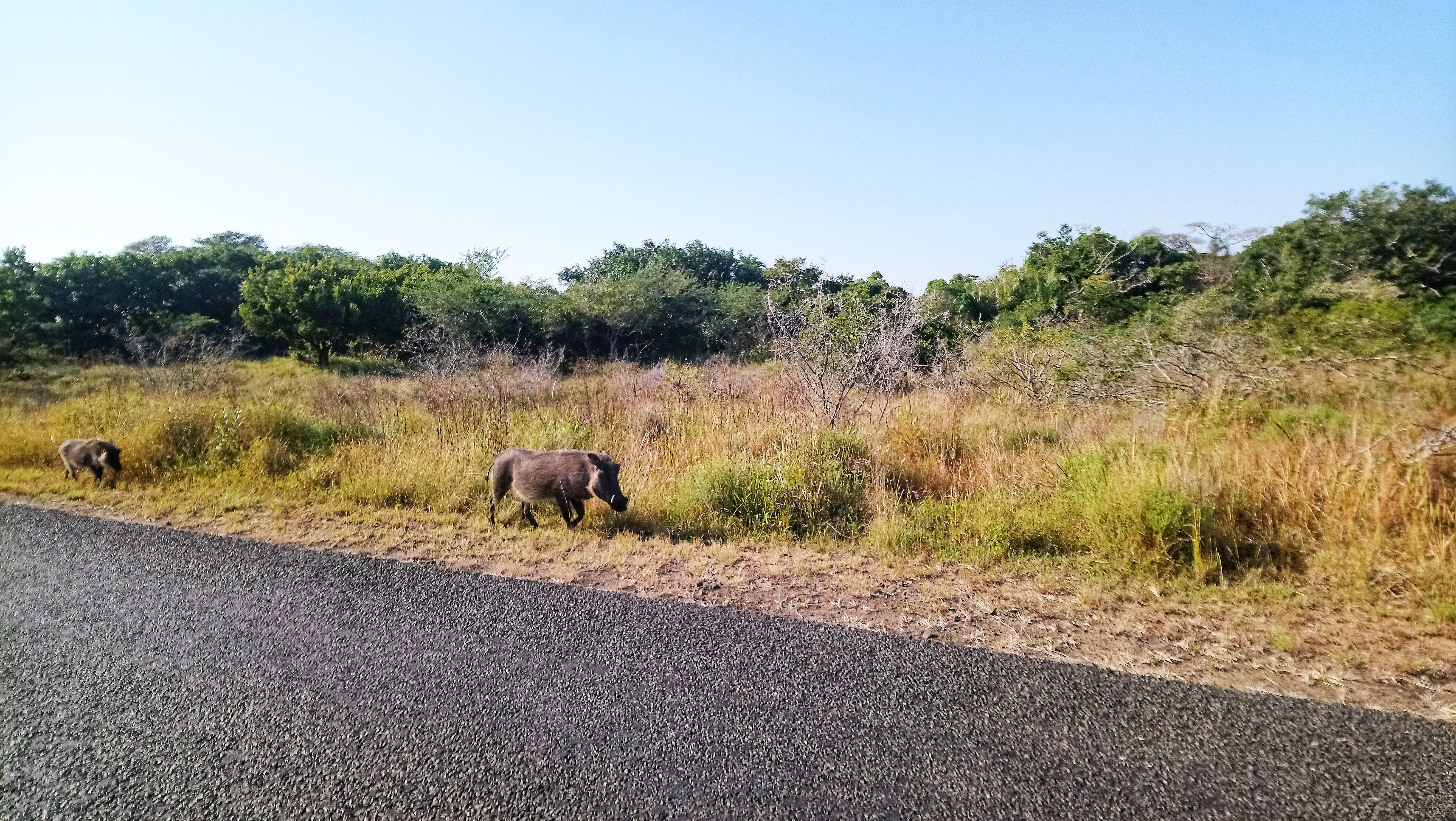 St Lucia Lodge on safari tour