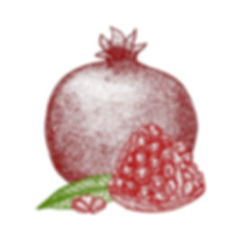 pomegranate-hand-draw-sketch-vector-1079