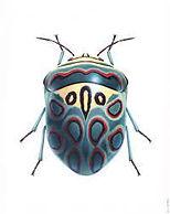 Insects Bernard Durin.jpg