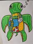 Turtle_Sample_b00.jpg