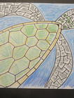 Turtle_Sample_b07.JPG