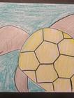 Turtle_Sample_b06.JPG