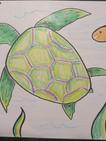 Turtle_Sample_b05.jpg