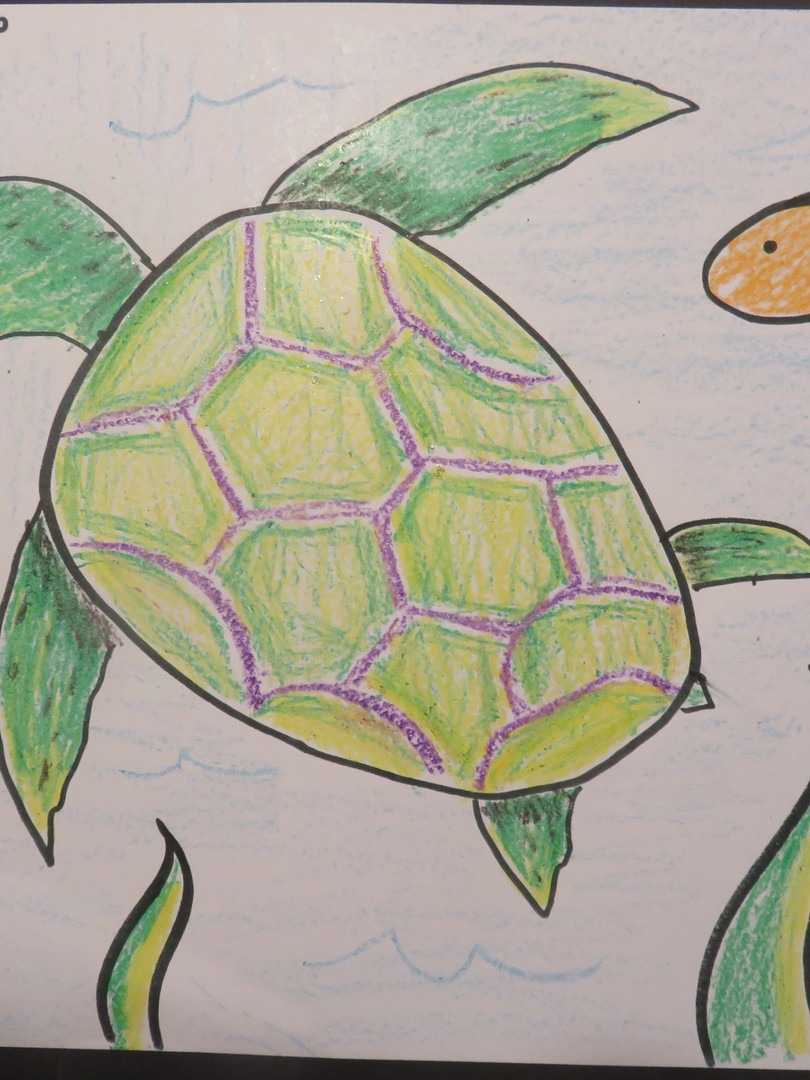 Turtle_Sample_b05.jpg