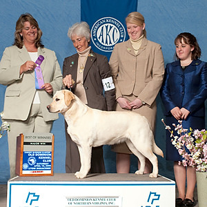 Ember/AKC GCH UKC CH ShadowGlen After Glow CD RE CGC