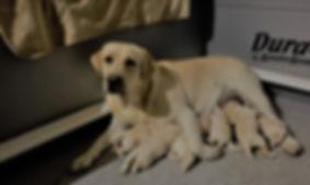 2019-12-13 Shammy and pups (2).jpg