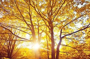 autumn-forest_1204-334.jpg