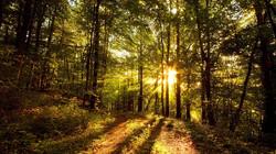 sunlight-on-trees-wallpaper-1