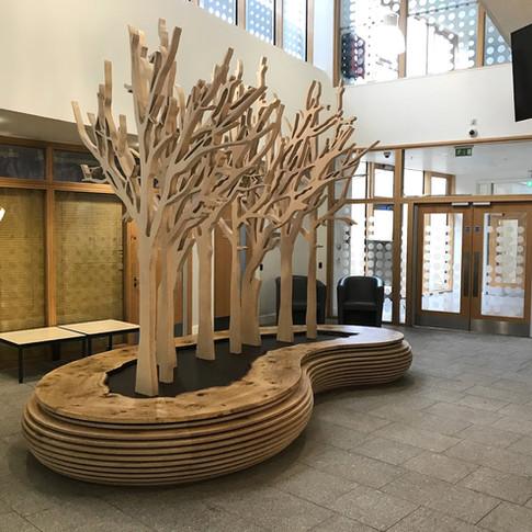 Birch Plywood™