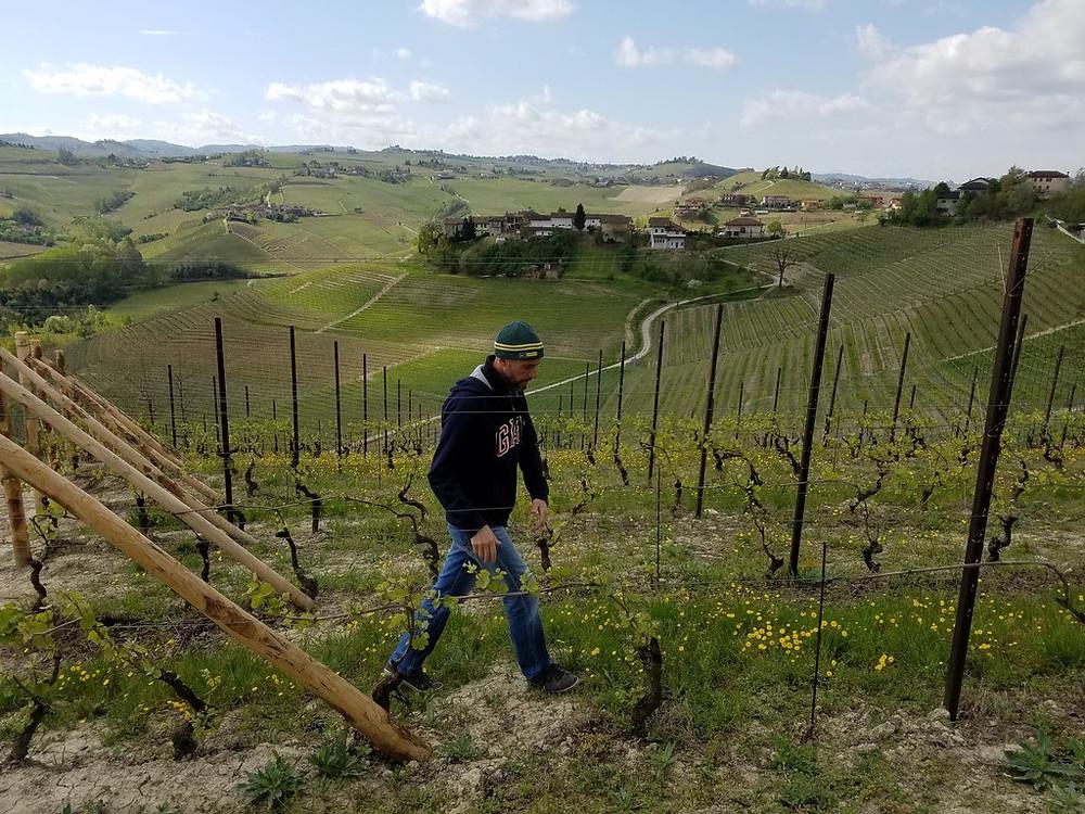 Renato Vacca, strolling through his vineyard