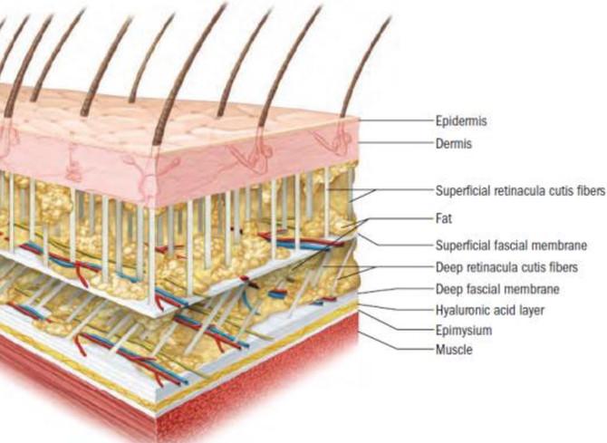 Understanding & Healing Cellulite