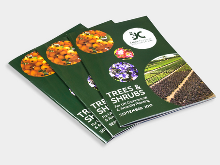 Digital vs Printed Company Brochures – Which is right for your business?
