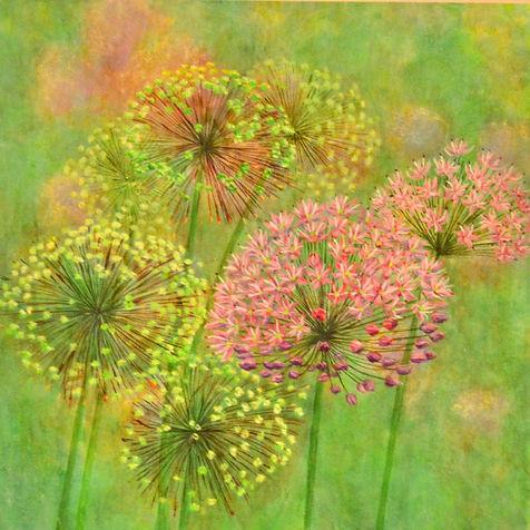 Cathy Renken- Alliums