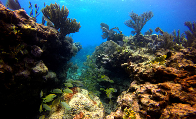 Reef Composition