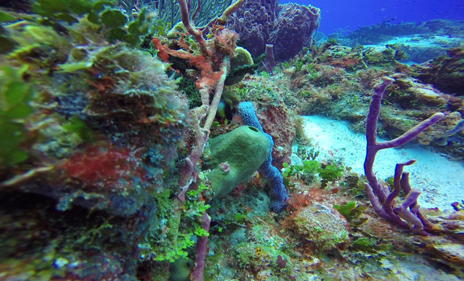 Sponges and Algaes