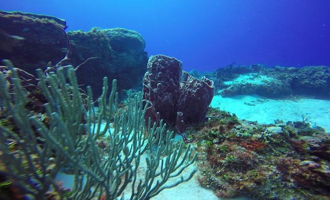 Slit-pore Sea Rods