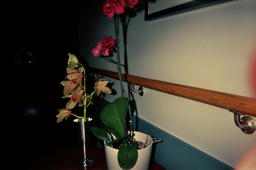35mm photo