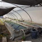 Aquaculture 1