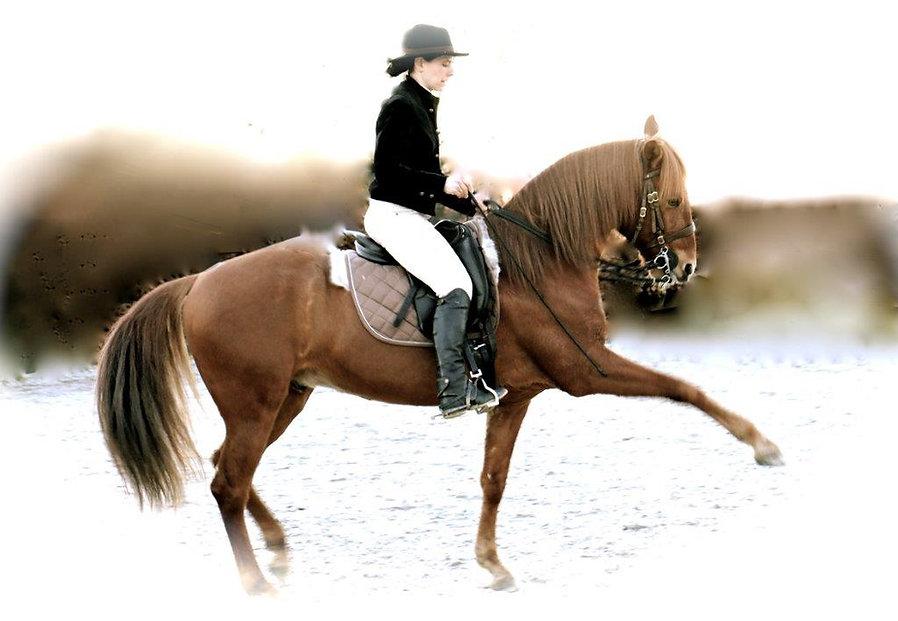 pferd101.jpg