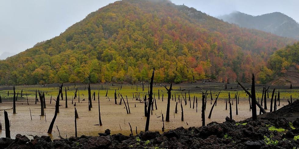 Otoño Imperdible. Parque Nacional Conguillio, Araucanía (1)