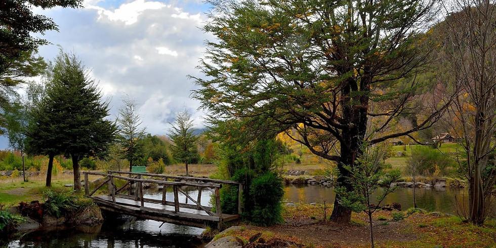 Otoño Imperdible. Parque Nacional Conguillio, Araucanía