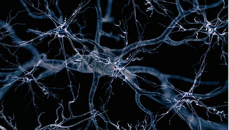 autonomic nerves.png