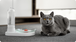 KittySpring, Kickstarter, cat-friendly water fountain, for cats, cats accessories