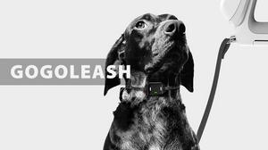 GoGoLeash All-in-One Dog Leash Collar System Kickstarter pets