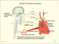 ANS-brain-schematic-689x520.jpg