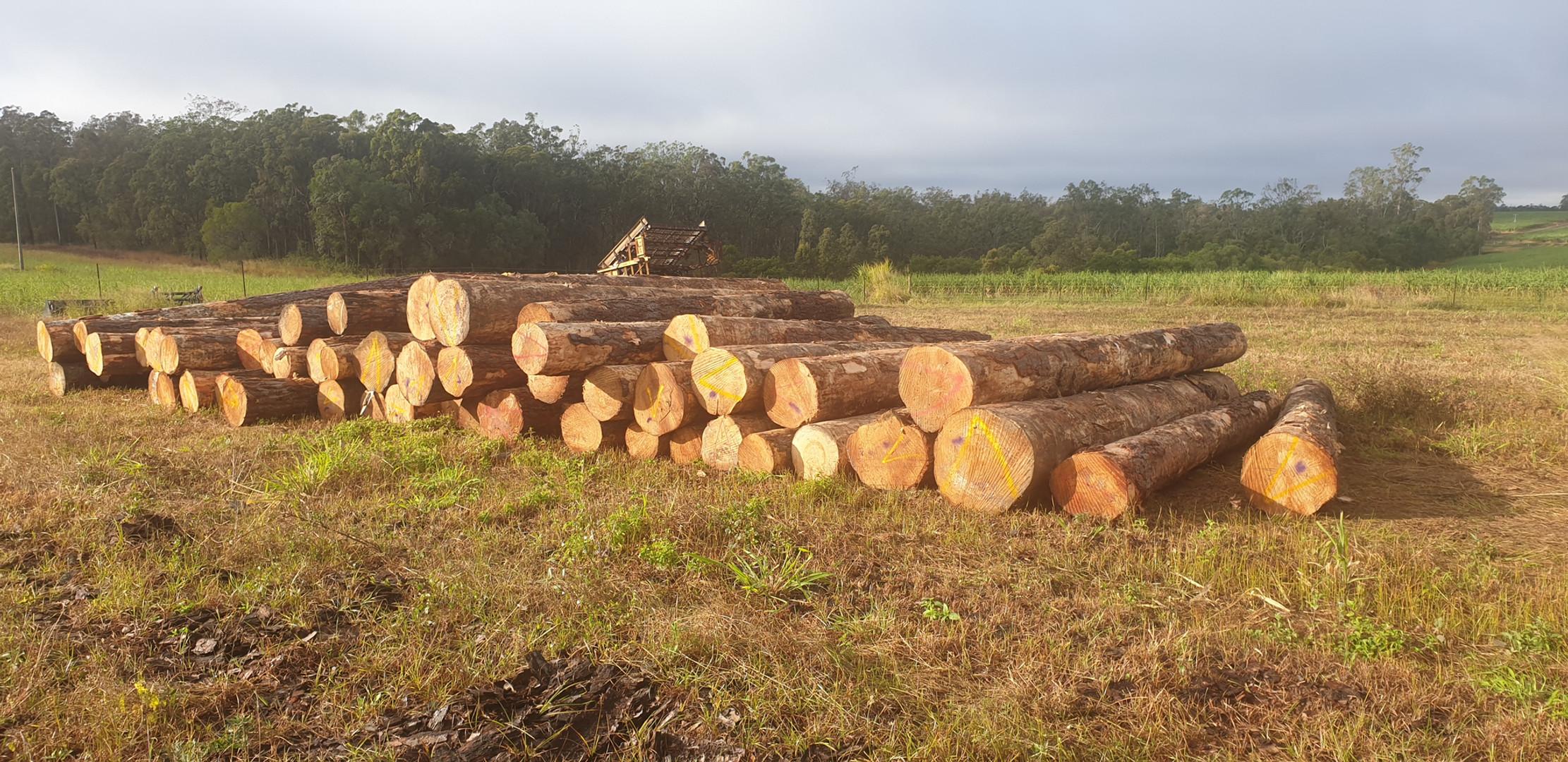 Logs on site