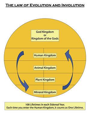 Law of Evolution and Involution.jpg