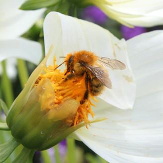 Bee by Cristo Noir