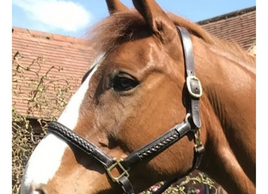 Plaited Leather Headcollar