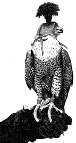 falcon-with-hood.png