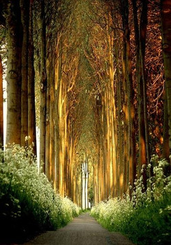 cathedral forest.jpg