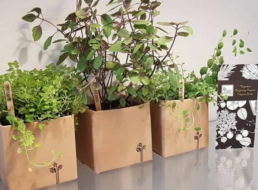 Eles criaram um clube de assinatura de hortas para apaixonados por plantas