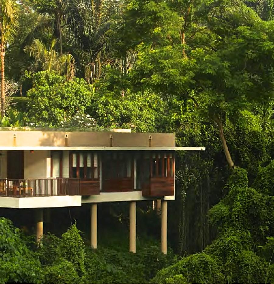 Alila jungle
