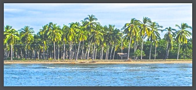 Coco palms SC lagoon