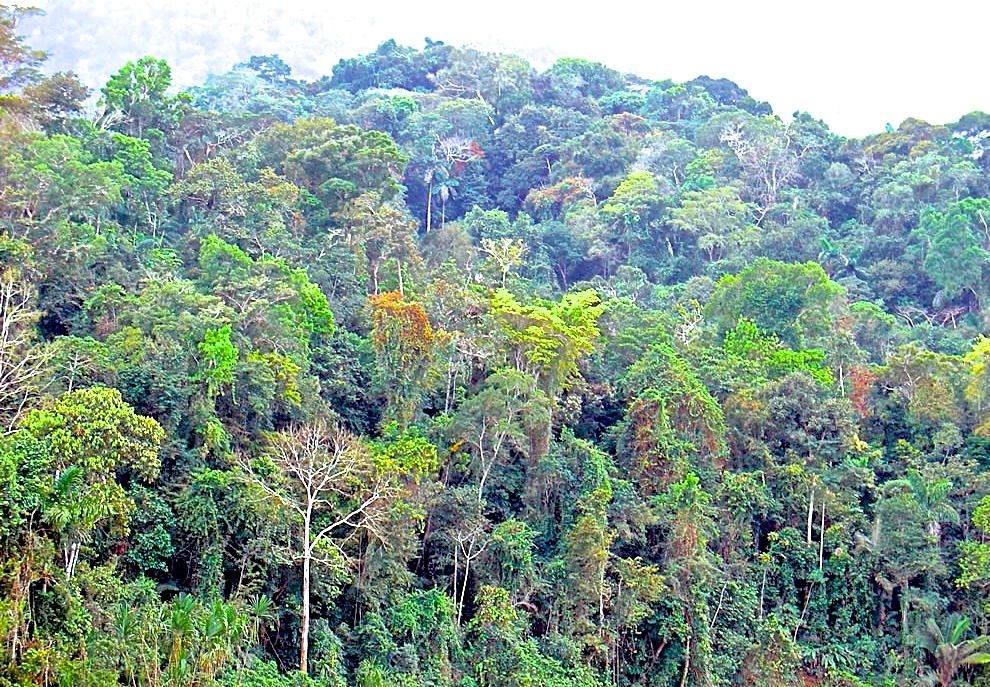 Mountains rainforest above San Blas