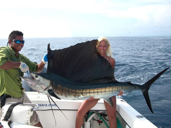 Sailfish blonde